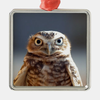 Young Burrowing Owl Silver-Colored Square Ornament
