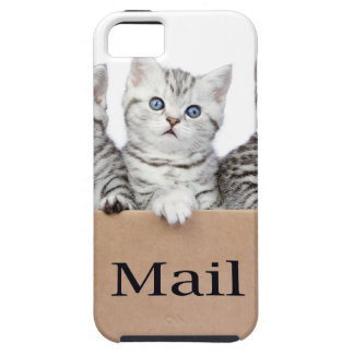 Young cats in cardboard box with word Mail iPhone 5 Cover