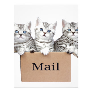 Young cats in cardboard box with word Mail Letterhead