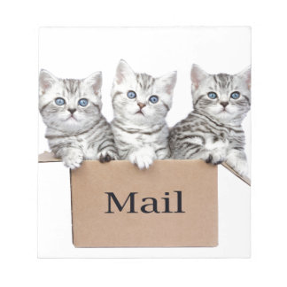 Young cats in cardboard box with word Mail Notepad