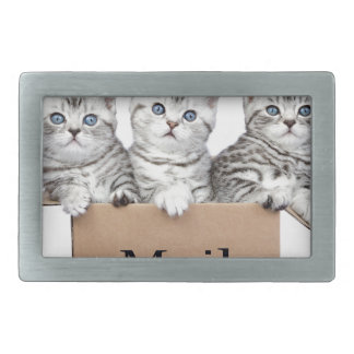 Young cats in cardboard box with word Mail Rectangular Belt Buckle
