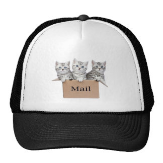 Young cats in cardboard box with word Mail Trucker Hat