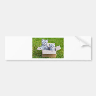 Young cats in cartboard box on grass bumper sticker