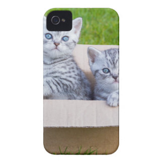 Young cats in cartboard box on grass iPhone 4 Case-Mate cases