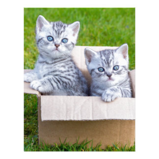 Young cats in cartboard box on grass letterhead design