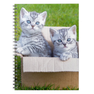 Young cats in cartboard box on grass note book