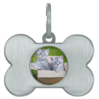Young cats in cartboard box on grass pet tag