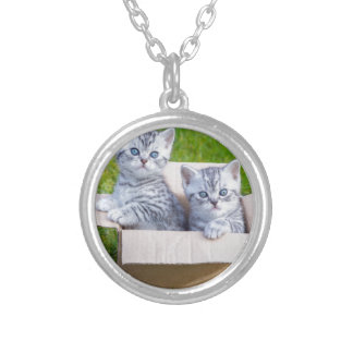 Young cats in cartboard box on grass silver plated necklace