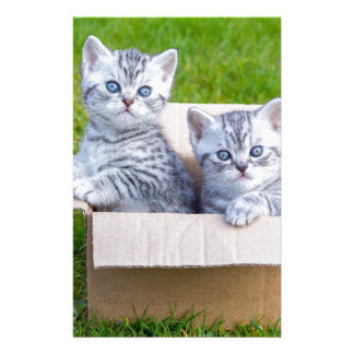 Young cats in cartboard box on grass stationery design