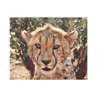 Young cheetah close-up canvas print