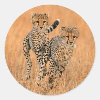 Young Cheetahs (Acinonyx Jubatus) Running Classic Round Sticker