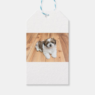 Young Chi Chu dog lying on parquet floor Pack Of Gift Tags