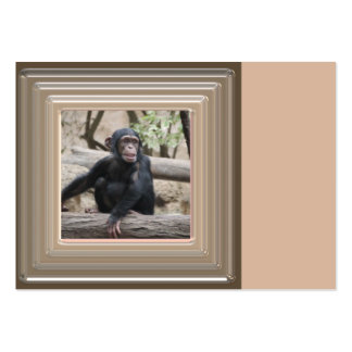 young chimpanzee 02 pack of chubby business cards