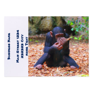 young chimpanzee 03 pack of chubby business cards