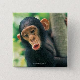Young Chimpanzee (Pan troglodytes) 2 Inch Square Button