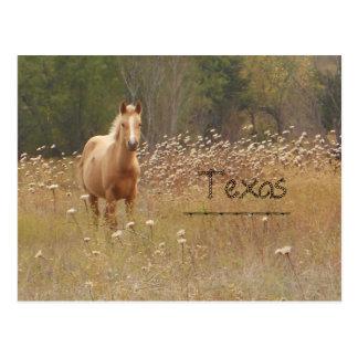 Young Country Horse Texas Postcard