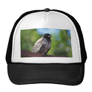 Young Crow Trucker Hat