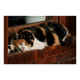 Young domestic cat poster