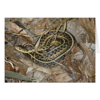Young Eastern Garter Snake Coordinating Items Card