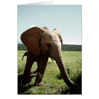 young elephant card