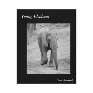 Young Elephant on Gallery Canvas- By Fern Savannah Canvas Print