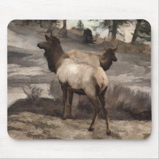 Young Elk Bucks   -  Banff Alberta Mouse Pad
