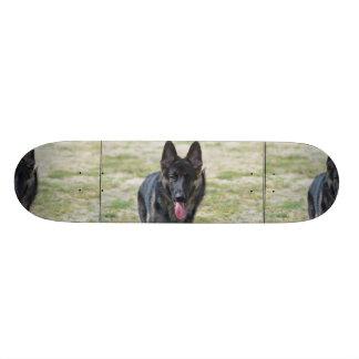Young German Shepherd Skateboards