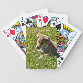 Young Golden Furred Puppy Pet-lover Gift Poker Deck