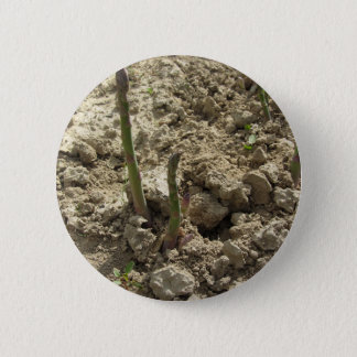 Young green asparagus sprouting from the ground 2 inch round button
