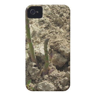 Young green asparagus sprouting from the ground Case-Mate iPhone 4 case