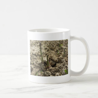 Young green asparagus sprouting from the ground coffee mug