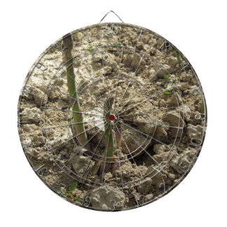 Young green asparagus sprouting from the ground dartboard