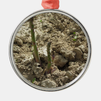 Young green asparagus sprouting from the ground metal ornament