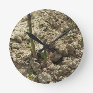 Young green asparagus sprouting from the ground round clock