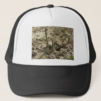 Young green asparagus sprouting from the ground trucker hat