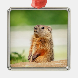 Young Groundhog Metal Ornament