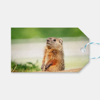 Young Groundhog Pack Of Gift Tags