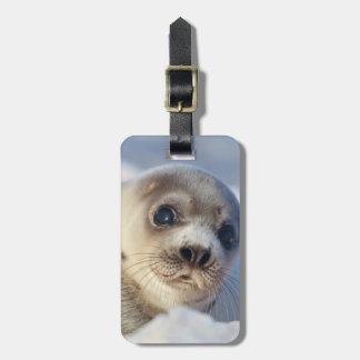 Young Harp Seal Luggage Tag