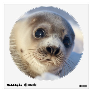 Young Harp Seal Wall Sticker