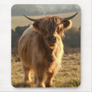Young Highland Cow Mouse Pad