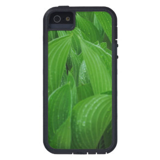 Young Hostas with Raindrops Case For The iPhone 5