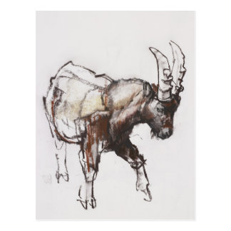 Young Ibex Gran Paradiso 2005 Postcard