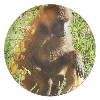 Young Juvenile Baboon Sitting and Looking Down Dinner Plates