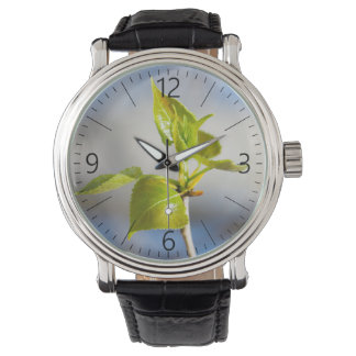Young leaves watch