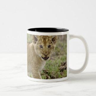 Young lion cub, Masai Mara Game Reserve, Kenya Two-Tone Coffee Mug