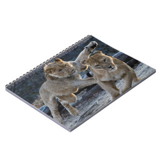 Young Lion Plays With Mom Notebooks