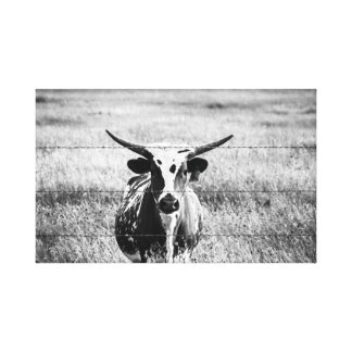 Young Longhorn Canvas Print