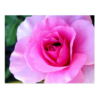 Young Love: Rose Floral Postcard