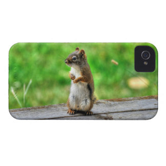Young Male Squirrel Standing Wildlife Photo iPhone 4 Case-Mate Cases
