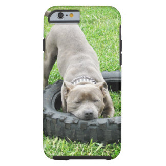 Young Male Staffy Playing With His Tyre, Tough iPhone 6 Case
